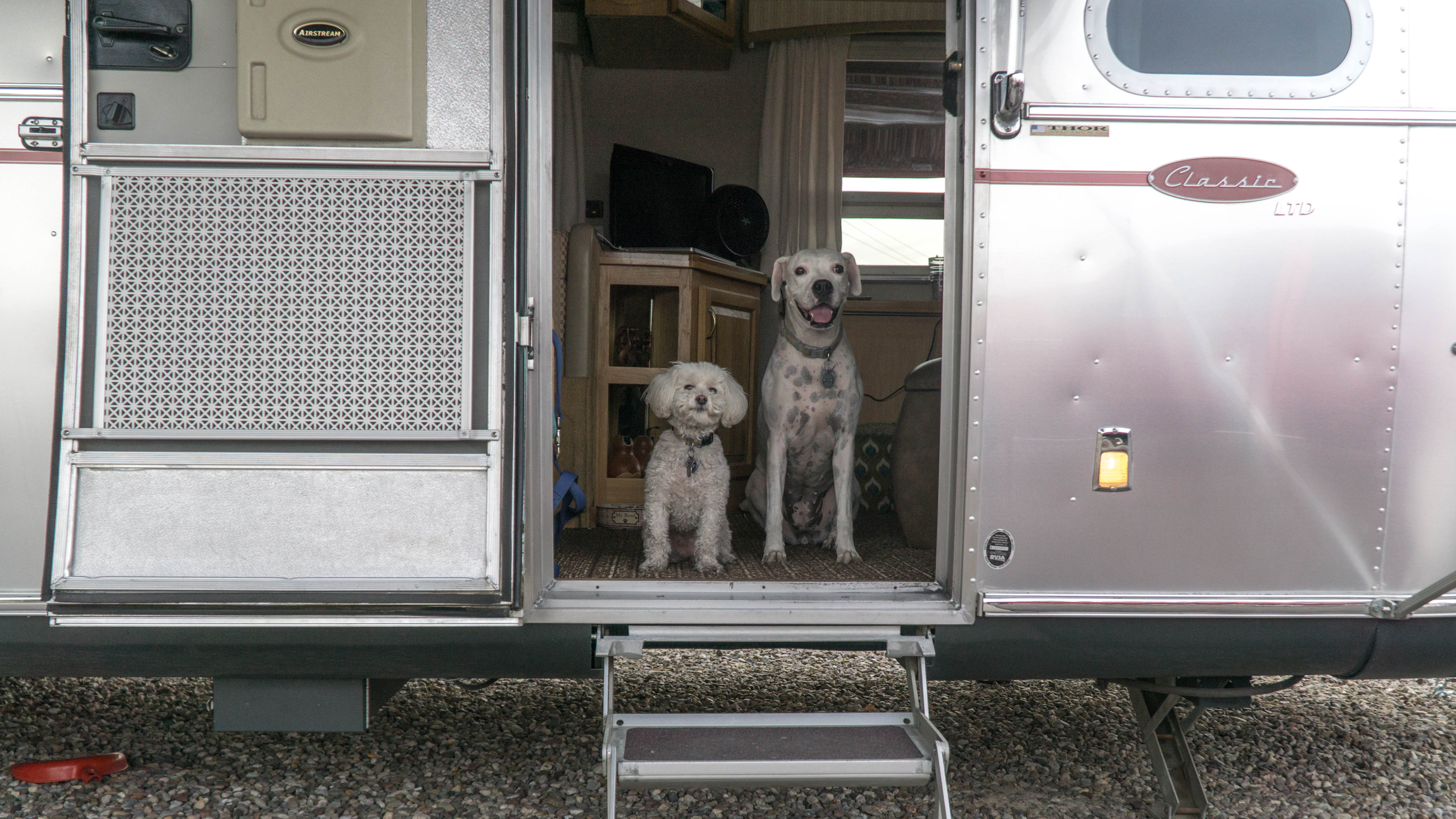 5 Suggestions for Ensuring a Good Transition to Tiny Living for your Dog